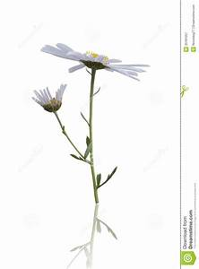 meadow-wild-flower-include-clipping-path-white-background ...