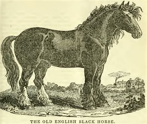 english extinct horse horses breed friday type equine wikipedia lists yorkshire coach source native were europe engraving