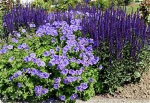 Winterharte Pflanzen Liste : herbststauden winterhart pflanzen f r nassen boden ~ Eleganceandgraceweddings.com Haus und Dekorationen