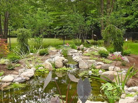 33 Best Images About Ponds, Rochester Ny, Backyard Ponds
