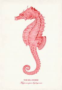 Coral Pink Seahorse Giclee Print Shabby Chic by ...