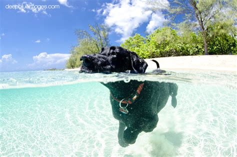 rum  diving dog deep blue images grand cayman underwater  topside photography experts