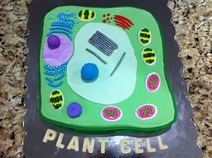 31 Best Plant Cell Images On Pinterest