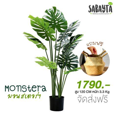 มอนสเตอร่าปลอม หรือพลูฉีก... - ต้นไม้ปลอม ขายต้นไม้ปลอมติดผนัง ต้นไม้ปลอมแต่งบ้าน By Sabayta ...