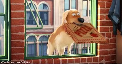 Pets Secret Giphy Gifs Dog Animal Animals