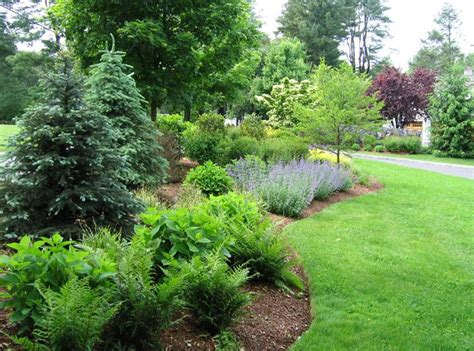 shrubs for garden borders 12 best ideas about privacy border on pinterest hedges prague and prunus