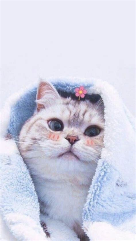 wallpaper kucing bayi kucing cantik binatang