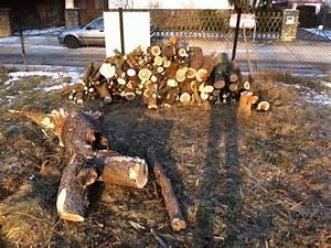 Was Kostet Baum Fällen : kosten baumf llung preis f rs baum f llen und entfernen hausbau blog ~ Orissabook.com Haus und Dekorationen