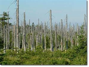Forest Affected By Acid Rain