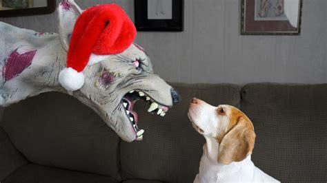 christmas zombie dog  cute dog maymo youtube