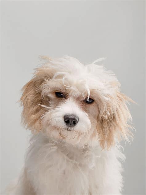 uncanny resemblances  classic dog breeds  humans