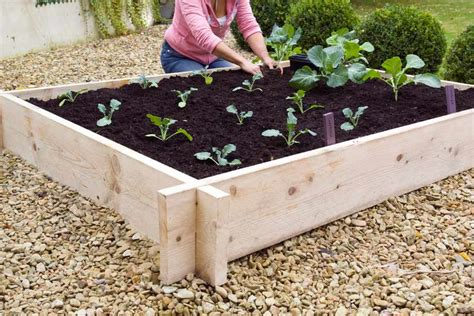 how to build raised beds for vegetables building a raised vegetable bed gardenersworld com