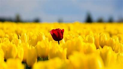 Single Flower Flowers Spring Nature Yellow Field