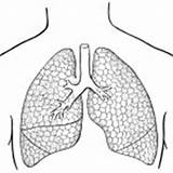 Coloring Human Lungs Organs Preschool Arm Kindergarten Worksheets Finger Hand sketch template