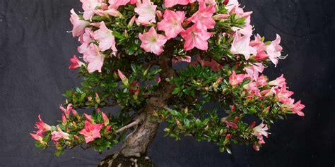 Botanischer Garten Berlin Bonsai bonsai ausstellung im botanischen garten