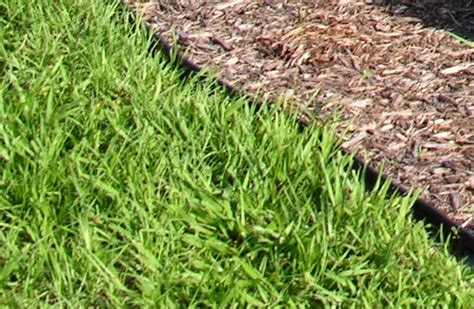 Which Type Of Grass Should I Plant In Orlando?