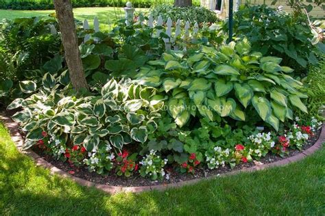 hosta shade garden shade garden with mostly foliage plants hostas begonias tree brick edging lawn grass house