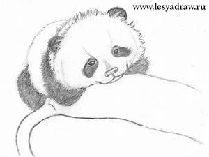 Zeichnen Lernen Mit Bleistift : einen panda zeichnen lernen dekoking diy bastelideen dekoideen zeichnen lernen ~ Frokenaadalensverden.com Haus und Dekorationen