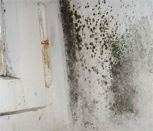 Schimmel Am Fenster Entfernen : stockflecken im zwickel ixel schimmel in dachd mmung wand d mmtapete fenster schimmelpest 8 ~ Whattoseeinmadrid.com Haus und Dekorationen