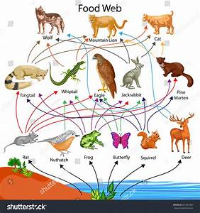 Education Chart Biology Food Web Diagram Stock Vector