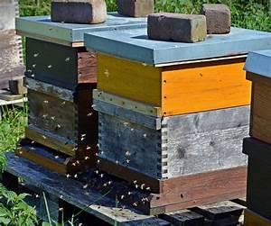 Wie Machen Bienen Honig : bienenbeute wissen rund um die imkerei honig und bienen ~ Whattoseeinmadrid.com Haus und Dekorationen