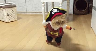 Pirate Cat Costume Halloween Ready Seas Sail