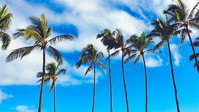 Palm Trees 4k Tree Summer Sky Palms