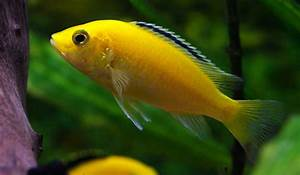 Transportbox Für Fische : wie viele fische f r mein aquarium aquariumeinrichten ~ Michelbontemps.com Haus und Dekorationen