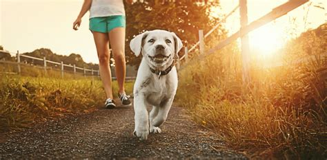 Walking a dog won't make your child fitter, but it can