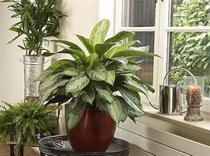 Soigner Les Plantes D39intrieur En T