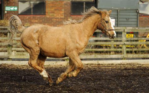 horse oldest long hoof worlds