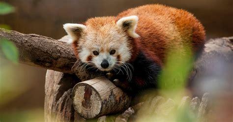 zoos states united denver airport animals