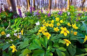 Blumen Im Frühling : blumen im fr hling wald stockfoto colourbox ~ Orissabook.com Haus und Dekorationen
