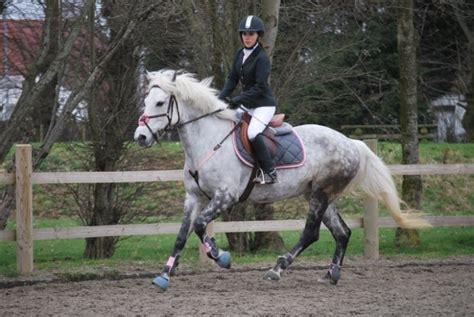 ensemble pour chevaux gris