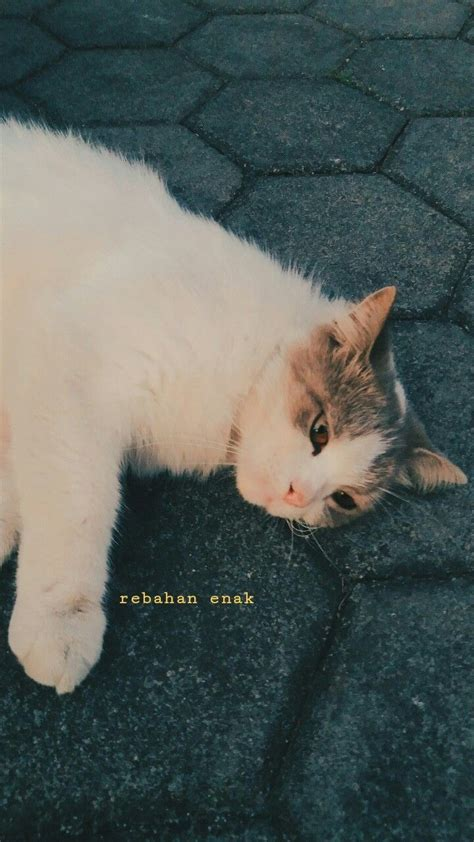 pin oleh agos sibaweh di kucing kucing lucu kucing lucu