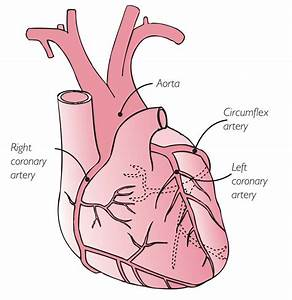 Heart Diagram Showing Arteries