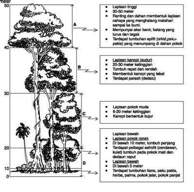 Cara yang paling praktis adalah dengan menatap langit melihat. TUMBUHAN SEMULA JADI DAN HIDUPAN LIAR: Hutan Hujan Tropika