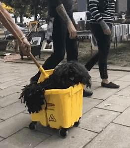Dog Mop Halloween Costume gif | GANG SLANGS