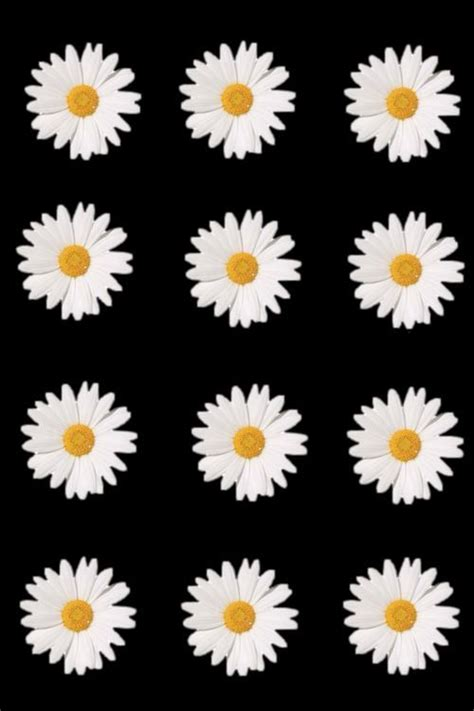Daisy Flowers Iphone Wallpaper Tumblr