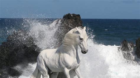 fondo de  caballo mustang  fondos de