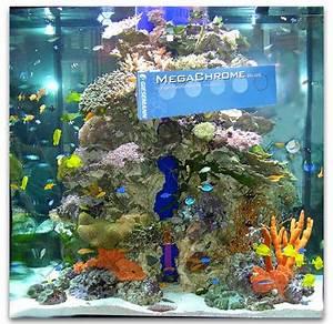 commencer un aquarium d eau de mer 28 images le bac r With tapis champ de fleurs avec canapé d angle arrondi pas cher