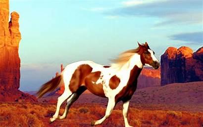 Horse Paint Painted Wallpapers Desert Backgrounds Quarter
