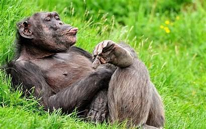 Animals Wild Desktop Wallpapers Wildlife Smile Crazy