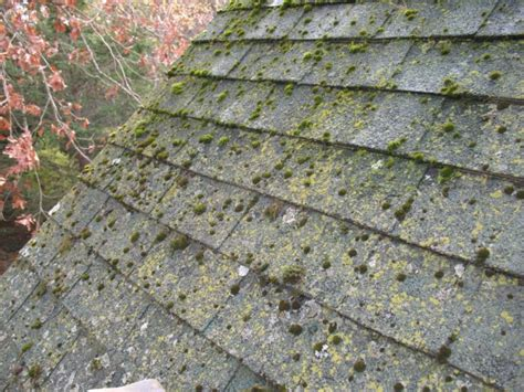 Lichen And Moss Roof Remediation