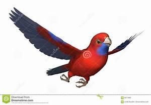 Crimson Rosella Parrot In Flight Stock Illustration ...