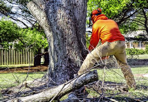 What's The Cost To Remove A Tree? Stump Removal? & More. Metal Dining Table Base. Solid Wood Vanity. Basement Decorating Ideas. Clawfoot Tub Shower Curtain Solutions. Decomposed Granite Driveway. Coastal Ceiling Lights. Mr Rogers Windows. Modern Address Numbers