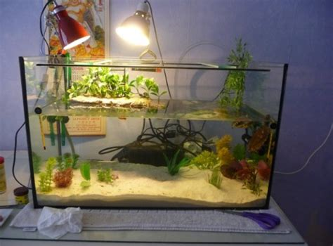 exemple d 233 coration aquarium tortue d eau