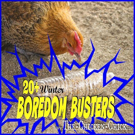 The 25+ Best Chickens Winter Ideas On Pinterest  Chicken Coops, Raising Chickens And Chicken