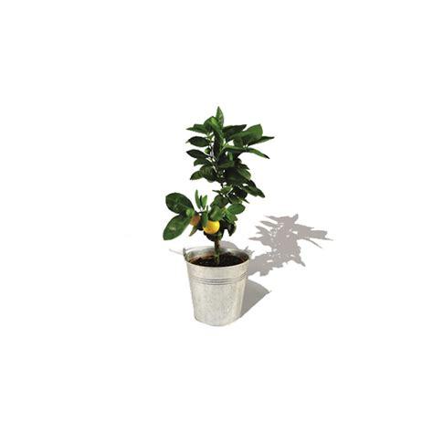 taille d un oranger en pot plante publicitaire personnalisable oranger dans un pot en zinc