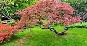Haie Pas Cher Qui Pousse Vite : les 8 plantes f tiches d 39 un jardin zen cerisier du japon ~ Premium-room.com Idées de Décoration